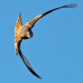by Stephen Crawford - Animals Birds