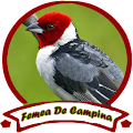FEMEA DE CAMPINA OFFLINE APK for Bluestacks
