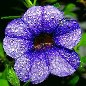 flower July 28 20131203.jpg