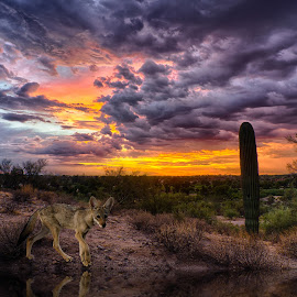 Tucson Tonight by Charlie Alolkoy - Digital Art Animals ( desert, sunset, arizona, tucson, sunrise, cactus )