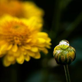 by Chetan Saini - Nature Up Close Flowers - 2011-2013 ( pwcreflections )