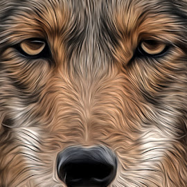 Coyote by Dawn Hoehn Hagler - Digital Art Animals ( coyote, desert museum, zoo, digital art, arizona, tucson, oil paint, photoshop,  )