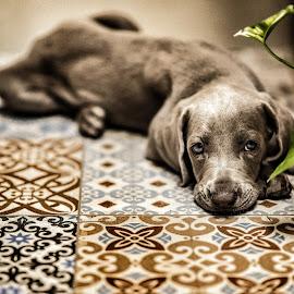 by Florent Serfati - Animals - Dogs Puppies