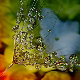 Only One Moment Of Beauty by Marija Jilek - Nature Up Close Natural Waterdrops