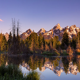Teton Sunrise by Chris Kaiser - Landscapes Mountains & Hills ( water, clouds, reflection, mountains, beaver pond, trees, sunrise, tetons )