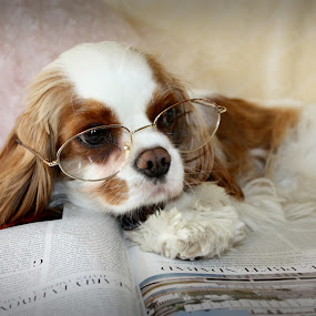 Vanity Fair Girl by Bevlea Ross - Animals - Dogs Portraits ( magazine, canine, reading, spaniel, dog, , mutt, pet, #GARYFONGPETS, #SHOWUSYOURPETS )