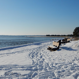 Benches Overlooking Wintery Beach by Kristine Nicholas - Novices Only Landscapes ( water, icy, bench, waterscape, snowy, sea, fences, ocean, seascape, beach, landscape, fencing, fence, benches, winter, tree, cold, blue, ice, snow, reservation, trees, waterway,  )