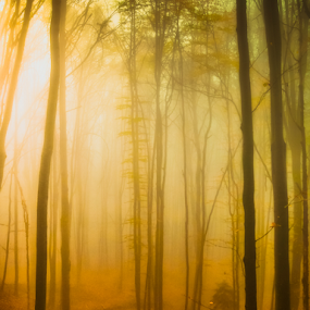 Lighting fog in forest by Opreanu Roberto Sorin - Nature Up Close Trees & Bushes ( mystery, sad, romania, heat, tree, nature, thriller, autumn, shadow, dark, weather, focus, darkness, light, black, wind, orange, grass, mysterious, mood, magura, forest, magic, dawn, season, nightmare, view, evil, golden, ray, warm, rainy, ground, sun, fantasy, symmetrical, path, mistyfog, evening, rain, misty, elegance, spooky, green, beautiful, morning, close up, foggy, red, fog, color, elegant, outdoor, fall, night, sunrise, horror, sibiu, mist, fear,  )