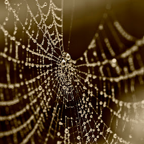 Another Universe  by Peter Spowage - Nature Up Close Webs