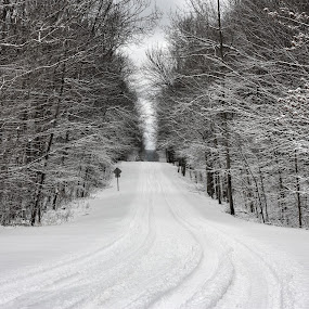Winter Road by Alena Purvis - Landscapes Forests ( michigan, winter, dirt road, snow, state park, white, trees, northern michigan, road )