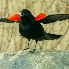 by Wilma Michel - Animals Birds