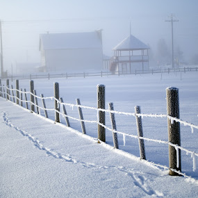 Lingering Morning Fog by Logan Knowles - Landscapes Prairies, Meadows & Fields ( fence, leading lines, winter, fog, snow,  )
