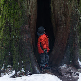 Look Up by Tanya Greene - Babies & Children Children Candids ( child, canada, tree, big tree, old tree, vancouver island, cedar, boy, cathedral grove )