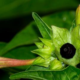 by Tarik Sazal - Nature Up Close Gardens & Produce