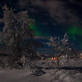 by Yvonne Reinholdtsen - Uncategorized All Uncategorized ( winter, tree, snow, aurora borealis, norway,  )