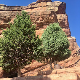 Red Rocks Trees by Mike Martinez - Novices Only Objects & Still Life