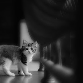 Kendis by Rudy Harianto - Animals - Cats Kittens