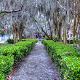 Common by Keith Wood - City,  Street & Park  City Parks ( kewphoto, hdr, park, beaufort sc, keith wood )