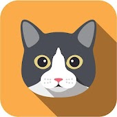 App Free Funny Cats Video apk for kindle fire