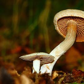 Duo by Gérard CHATENET - Nature Up Close Mushrooms & Fungi