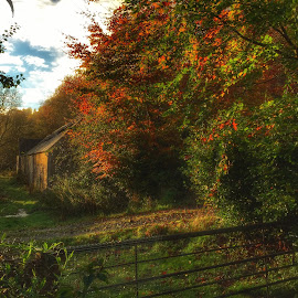Autumn at the Gate by Deborah Lister - Instagram & Mobile iPhone ( seasons, coours, autumn, fall, trees, leaves, rustic, rural )