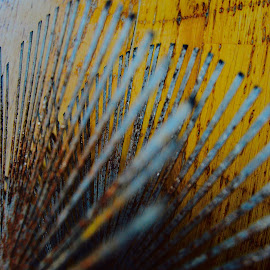 Metal and wood by Eirin Hansen - Abstract Macro