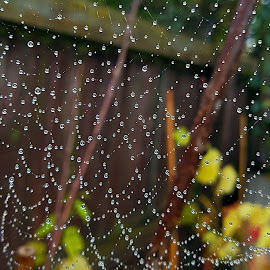 by Ingrid Anderson-Riley - Nature Up Close Webs