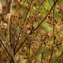 seeds by Zoran Zizak - Nature Up Close Leaves & Grasses
