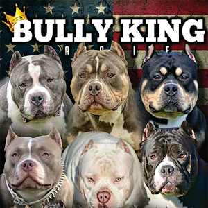 Cover art BULLY KING Magazine
