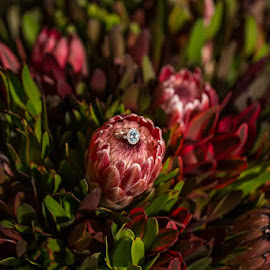 Engagement ring on Protea by Christa Droste - Wedding Details ( #weddingphotography #preweddingshoot #engagementshoot #engaged #photographers, #aristephotographers )