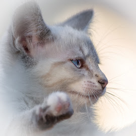 Luna by Dave Lipchen - Animals - Cats Kittens ( kitten )