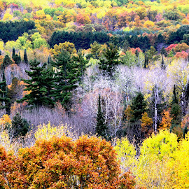 Scenic North Woods by Beth Bowman - Landscapes Forests