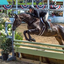 Jumping by Mike Watts - Animals Horses ( fence, rider, jumping, riding, horse )