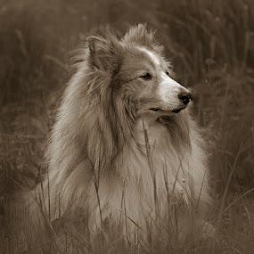 by Allan Wallberg - Animals - Dogs Portraits (  )