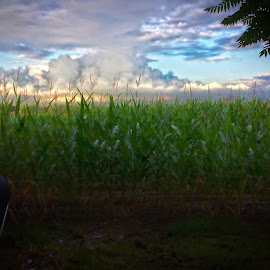 Eye to the sky by Tom Davison - Landscapes Cloud Formations ( clouds, sky, crops, cloudscape, summer, rural,  )