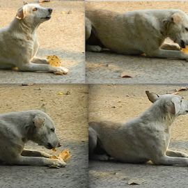 Having Lunch! by Swapnil Saraf - Animals - Dogs Playing ( animals, nature, food, candid, dog )