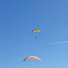 Paragliders by Victoria Artamonova - Sports & Fitness Other Sports ( two, sky, paraglider, fly, sea )