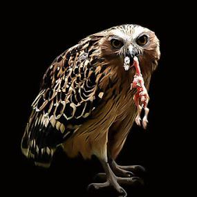 Killer's by Dimas N - Animals Birds