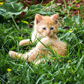 Kitten in the grass by Wilma Michel - Animals - Cats Kittens