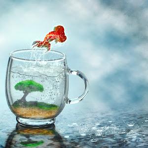 Pixoto Fish.jpg