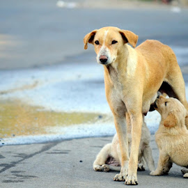 mother love  by Dhanunjay Dhanu - Animals - Dogs Puppies