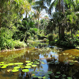 McKee's Botanical Garden 2 by Christine B. - Landscapes Waterscapes ( florida, palm trees, botanical garden, mckee's, water lilies,  )
