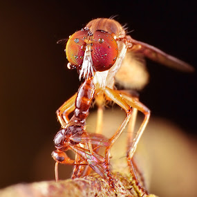 rf by Lanun Syah - Animals Insects & Spiders ( animals, macro, other, art, insects, close up )