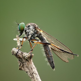 Lunch by Alvian Hp - Novices Only Macro