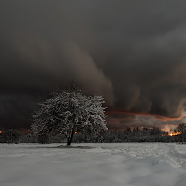 Winter by Kristian Pikner - Landscapes Weather ( clouds, estonia, winter, tree, nature, sunset, landscape, storm )