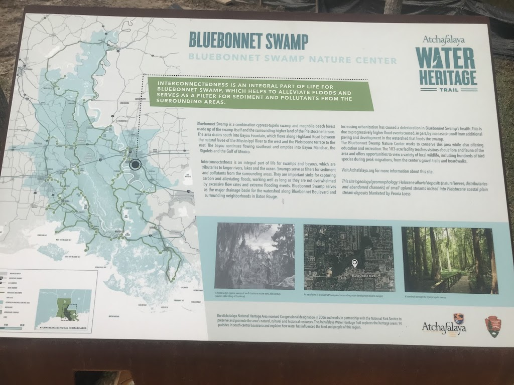 Interconnectedness is an integral part of life for Bluebonnet Swamp, which helps to alleviate floods and serve as a filter for sediment and pollutants from the surrounding areas. Bluebonnet Swamp is ...
