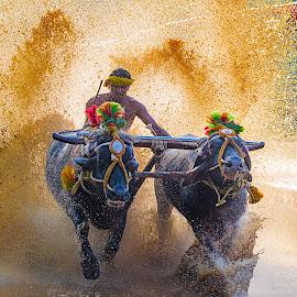 Kambala by Venkatraman Hegde - Sports & Fitness Running