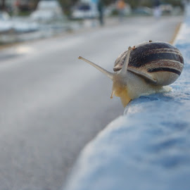 Cool snail by Matina Andrioti - Animals Reptiles
