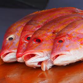 Fresh Fish by David Gilchrist - Food & Drink Ingredients ( fresh fish, fish, food, ingedients, fish for sale )