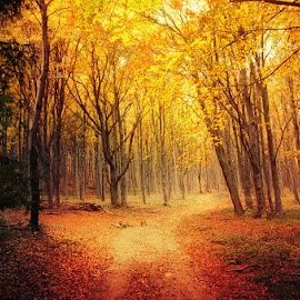 Autumn Walk LXI. by Zsolt Zsigmond - Landscapes Forests ( autumn, colors, fall, trees, forest, woods, light )